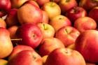 Obstbauer Paul Wieland