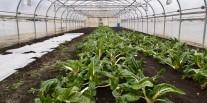 Les légumes d'hiver À Bellechasse