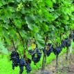 Menu du Terroir avec présentation des vins de la bourgeoisie