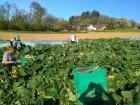 Association des producteurs de légumes du Vully