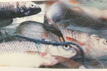 Soupe de poissons du lac